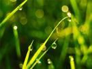 Christelijke e-card gras; dauw; morgen